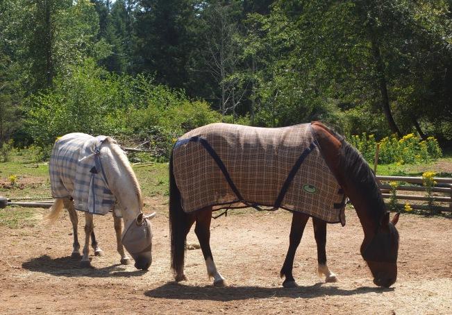 Maureen's Horses