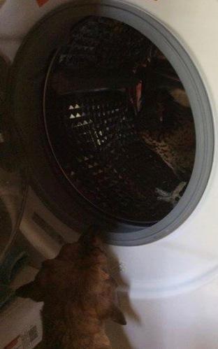 Pip In The Washing Machine 2