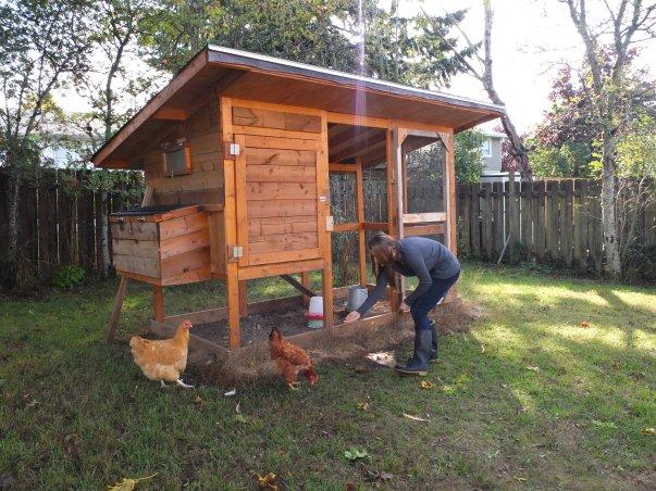 Emily Feeding Hens