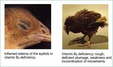 B6 Deficiency