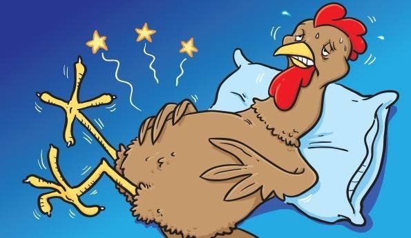 Sick Chicken