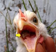 Wet Fowl Pox