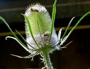 Bees (Credit: Liz Cioccea)