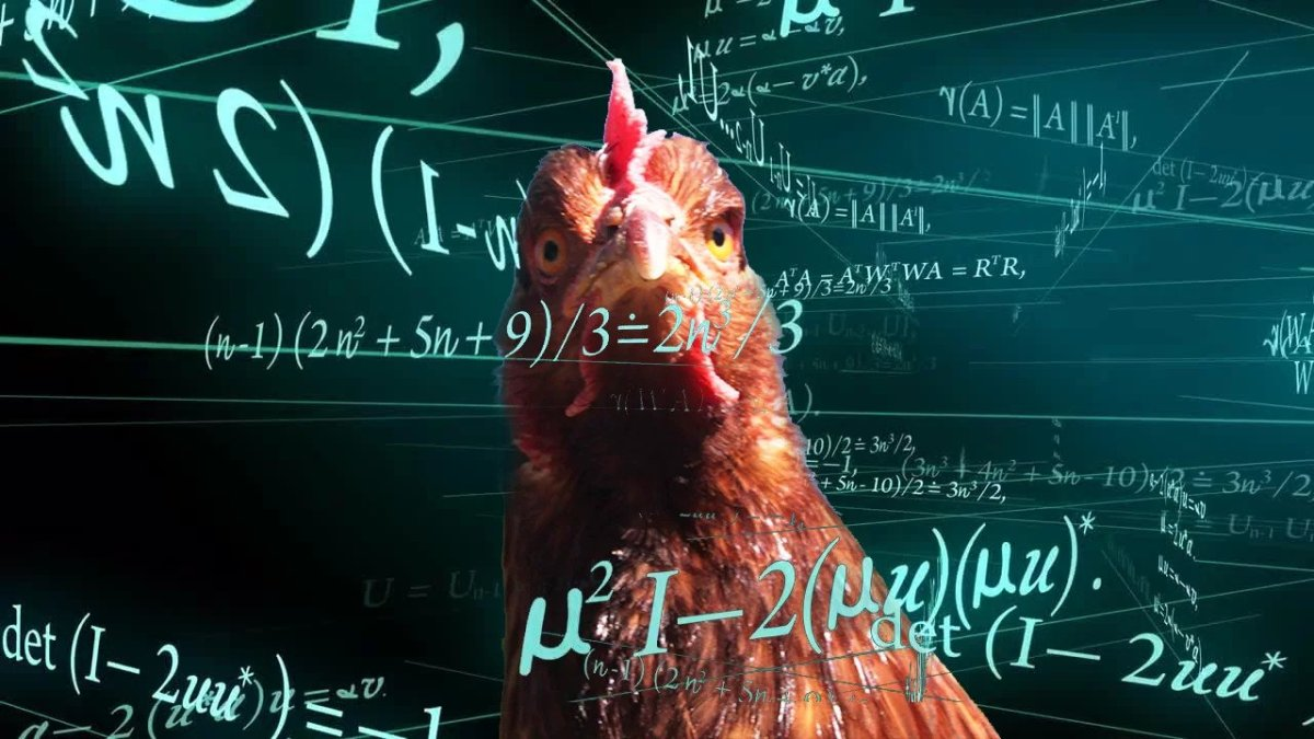 Are Chickens Smart? 5 Amazing Scientific Proofs of Poultry Intelligence
