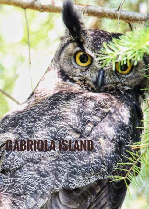 Great Horned Owl (Credit: Kumiko Hawkes)