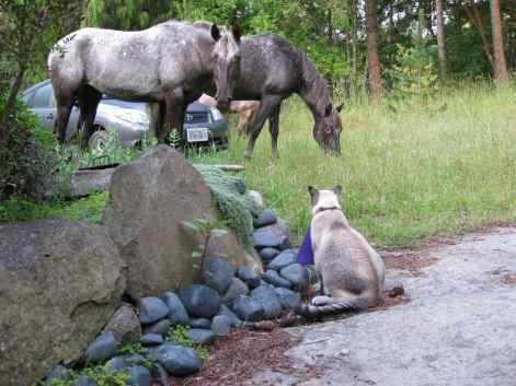 Horses&Ben
