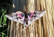 Moth (Credit: Liz Cioccea)