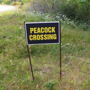 Peacock Crossing