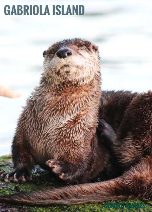 River Otter (Credit: Kumiko Hawkes)