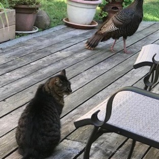 Turkey & Cat (Credit: Nan Leather)