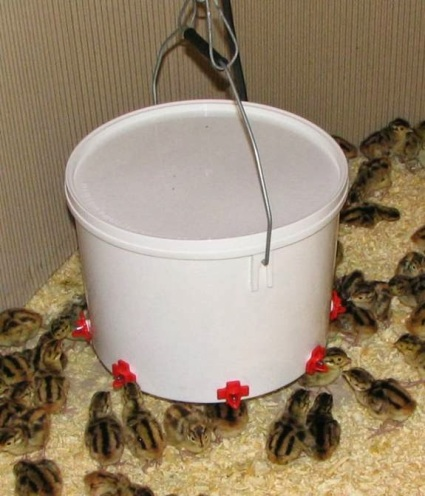 Nipple Style Waterer (Credit: Community Chickens)