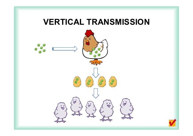 Vertical Transmission