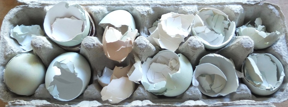 Customers' Returned Egg Shells