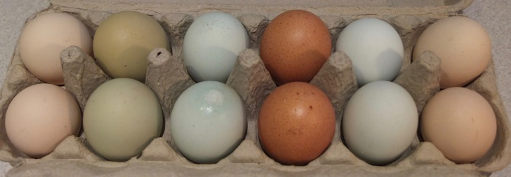 Rainbow Pack Eggs