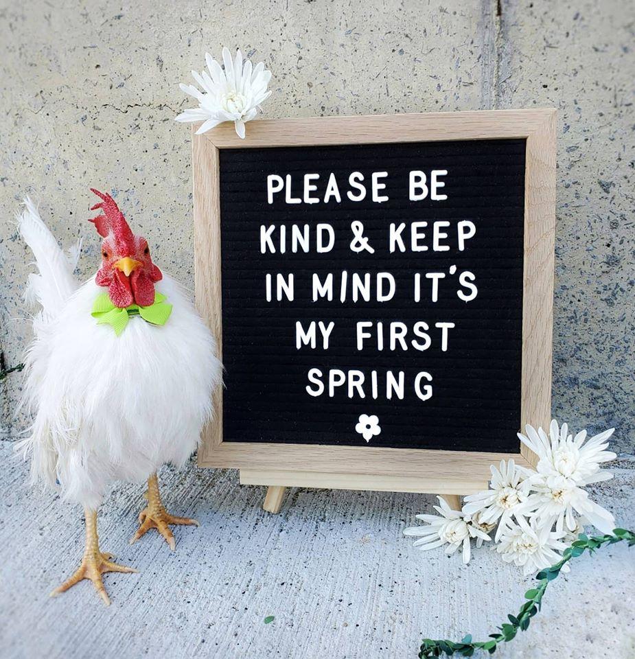 Cockerels In Spring