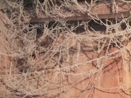 Coop Cobwebs