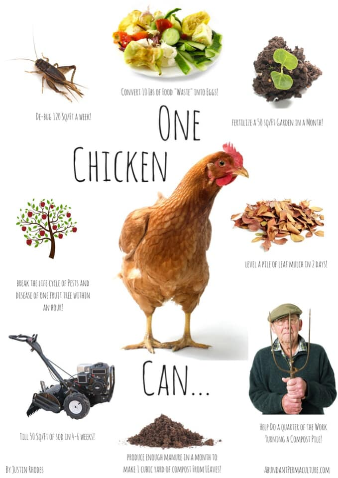 One Chicken Can ...