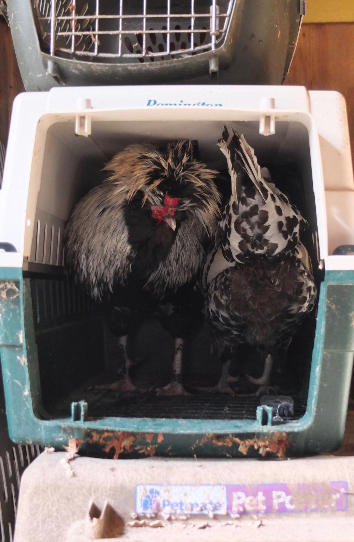 Simon & Mercedes In Crate