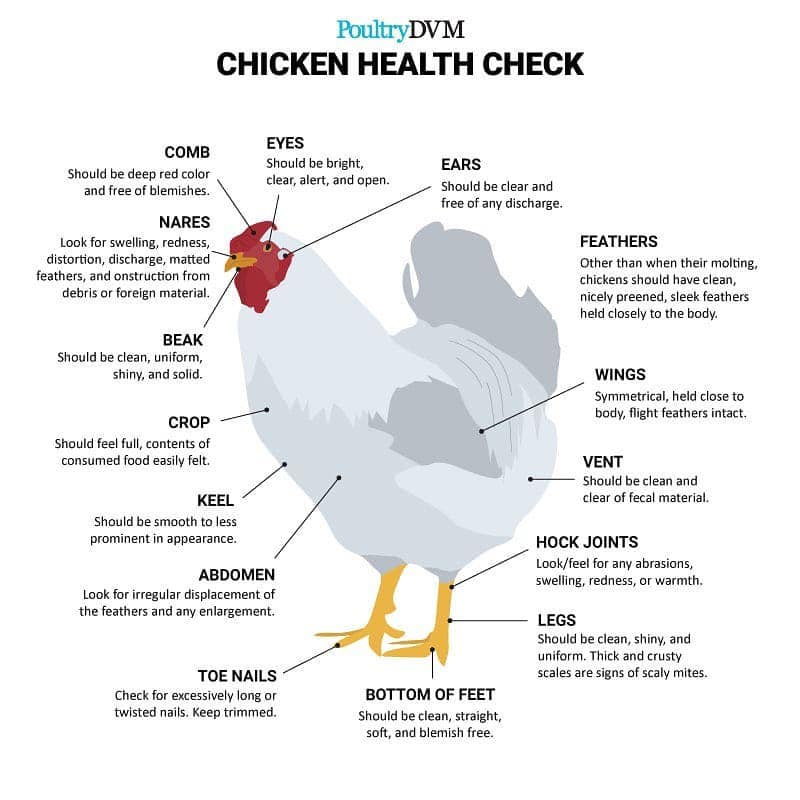 Chicken Health Check